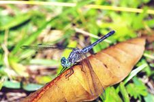 Free Resting Dragonfly Stock Photos - 20931423