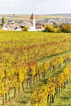 Autumnal Vineyards Royalty Free Stock Images