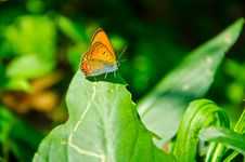 Free Butterfly Stock Photo - 20934710