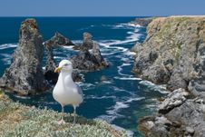 Free The Gull In Aiguilles De Port-Coton Royalty Free Stock Photo - 20934725