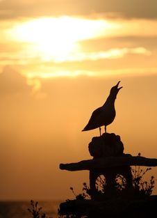 Free Seagull At Sunset Royalty Free Stock Image - 20934766