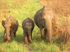 Free Mother With Baby Elephant Royalty Free Stock Photography - 20934967