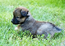 Free Puppy Royalty Free Stock Image - 20935796
