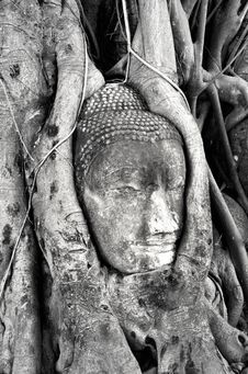 Free Buddha Of Ayutthaya Stock Images - 20936584