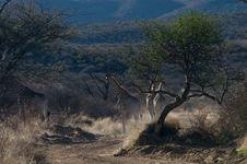 Free Safari Stock Photo - 20938900