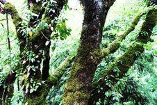 Free Shaggy Trees Royalty Free Stock Photos - 20938938