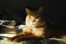 Free Cat Looking Out Of The Shadows Royalty Free Stock Photos - 20939128