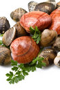 Free Smooth Clams Stock Photography - 20945042