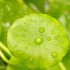 Free Green Leaf With Water Drop Royalty Free Stock Image - 20940016