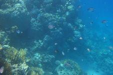 Free Many Fish Egypt Stock Images - 20941714
