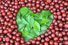 Free Heart Cherry Stock Photos - 20942333
