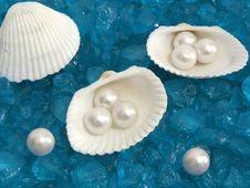 Free White Shells And Pearls On Rocky Blue Background Royalty Free Stock Image - 20942376