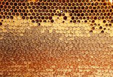 Free Honeycomb Stock Photography - 20944842