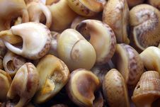 Free Oceanic Sinks Molluscs Stock Photo - 20944890