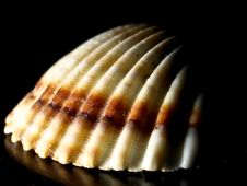 Shell Structure Royalty Free Stock Photo