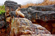 Free Sea Lion On Rock Royalty Free Stock Photos - 20944918