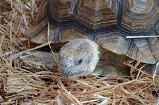 Free Tortoise Royalty Free Stock Image - 20945716