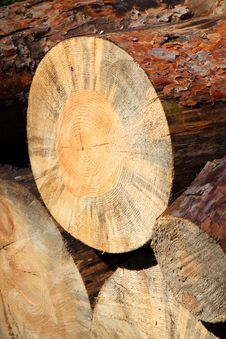 Free Pile Of Felled Tree Royalty Free Stock Photo - 20947035