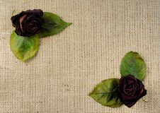 Free Dried Red Roses Background Stock Photos - 20947953