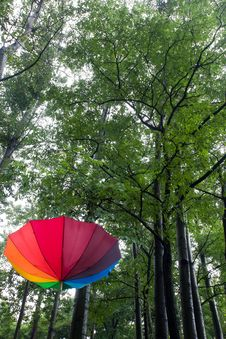 Free Colorful Umbrella And Trees Stock Images - 20948474