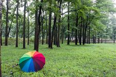Free Colorful Umbrella And Trees Royalty Free Stock Images - 20948479