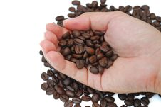 Free Coffee Seed Stock Images - 20948734
