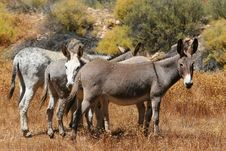 Four Donkeys Stock Images