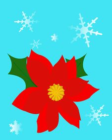 Free Christmas Poinsettia Stock Images - 20949334