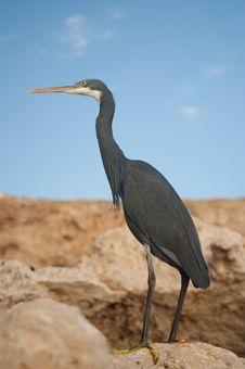 Free Heron Dark Stock Photo - 20949670