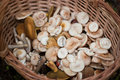 Free Mushrooms In Wooden Basket Stock Photo - 20958020