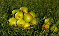 Free Basket Of Pears Royalty Free Stock Photos - 20952068