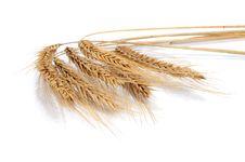Free Wheat Royalty Free Stock Photos - 20952098