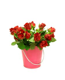 Free Red Roses In Metal Bucket On White Stock Image - 20952981