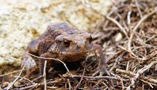 Free Frog In Forest Stock Photo - 20953160