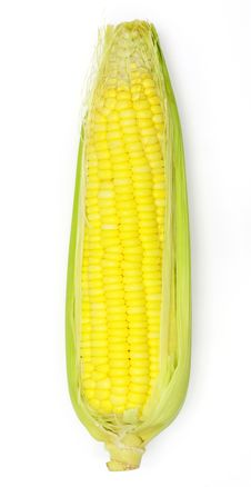 Free Corn Stock Image - 20954021
