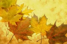 Free Backgrounds Leaf Stock Images - 20954234
