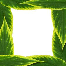 Free Natural Green Leaf Frame Stock Photos - 20954483