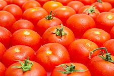 Free Multitude Of Tomatoes Close-up Royalty Free Stock Photography - 20955647