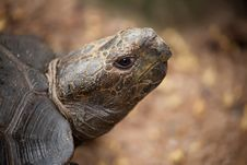 Free Portrait Of A Turtle Stock Images - 20956744