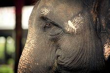 Portrait Of An Elephant Stock Photos