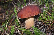 Free Mushroom Stock Photo - 20957310