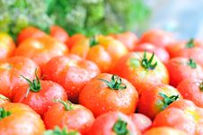 Free Fresh Tomatoes. Royalty Free Stock Images - 20957629