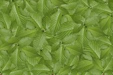 Free Green Plant Background, Young Growth Stock Image - 20958381