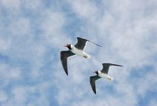 Free Two Seagulls Royalty Free Stock Photo - 20958395