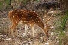 Free Deers Stock Image - 20959191