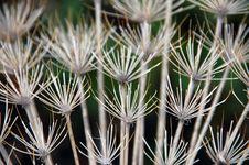 Free Dry Grass Stock Image - 20959661