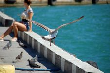 Free Girl And Seagull Royalty Free Stock Image - 20959716