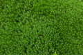 Free Fresh Green Grass Stock Images - 20960224