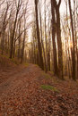 Free Beech Forest Stock Photo - 20965520