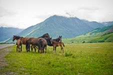 Group Horses On Meadows Between Mountains Royalty Free Stock Image